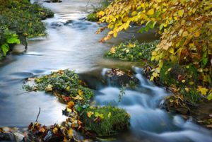fall water automation actions